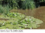 Купить «Речная заводь с кувшинками», фото № 5349326, снято 8 июня 2013 г. (c) Иван Тимофеев / Фотобанк Лори