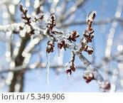Купить «Заледеневшая ветка», фото № 5349906, снято 29 марта 2013 г. (c) Юрий Плющев / Фотобанк Лори