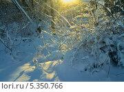 Купить «Солнечное зимнее утро», фото № 5350766, снято 5 декабря 2013 г. (c) александр жарников / Фотобанк Лори