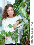 Купить «Девушка ухаживает за растениями, протирая листья от пыли», фото № 5353742, снято 17 ноября 2013 г. (c) Кекяляйнен Андрей / Фотобанк Лори