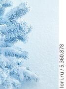 Купить «Зимний фон с заснеженной елью», фото № 5360878, снято 5 декабря 2013 г. (c) Икан Леонид / Фотобанк Лори