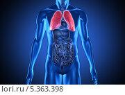 Купить «Digital blue human with highlighted red lungs», фото № 5363398, снято 21 октября 2018 г. (c) Wavebreak Media / Фотобанк Лори