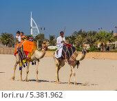 Купить «Люди верхом на верблюдах на пляже Джумейра в Дубае», фото № 5381962, снято 11 ноября 2013 г. (c) Олег Жуков / Фотобанк Лори