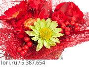 Флористическая композиция с красными цветами. Стоковое фото, фотограф Александр Орлов / Фотобанк Лори