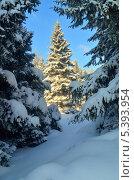 Зимний лес. Стоковое фото, фотограф александр жарников / Фотобанк Лори