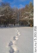 Купить «Следы на снегу», фото № 5393958, снято 12 декабря 2013 г. (c) александр жарников / Фотобанк Лори