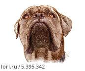 Векторный рисунок собаки. Стоковая иллюстрация, иллюстратор Сергей Емельянов / Фотобанк Лори
