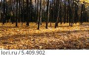 Купить «Осенний лес», эксклюзивный видеоролик № 5409902, снято 21 декабря 2013 г. (c) Алёшина Оксана / Фотобанк Лори