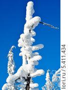 Заснеженная ветка дерева на фоне голубого неба в солнечный день. Стоковое фото, фотограф Алексей Леонтьев / Фотобанк Лори