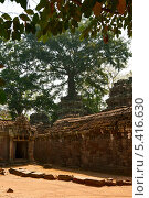 Храм Та Пром, Ангкор, Камбоджа (2013 год). Стоковое фото, фотограф Юлия Бабкина / Фотобанк Лори