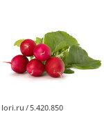 Купить «Редис на белом фоне», фото № 5420850, снято 15 мая 2011 г. (c) Natalja Stotika / Фотобанк Лори