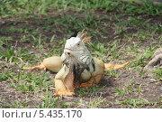 Ящерица. Стоковое фото, фотограф Михаил Дериглазов / Фотобанк Лори