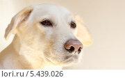 Собачья преданность. Стоковое фото, фотограф Svitlana Aryeva / Фотобанк Лори
