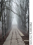 Зимний туман в городском парке. Стоковое фото, фотограф Наталия Тихонова / Фотобанк Лори