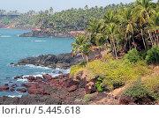 Пальмы на берегу Индийского океана (2008 год). Стоковое фото, фотограф Kate Chizhikova / Фотобанк Лори