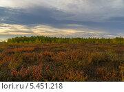 Лесотундра. Стоковое фото, фотограф Камиль Шарафутдинов / Фотобанк Лори