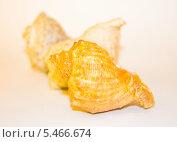 Морские ракушки. Стоковое фото, фотограф Кухаренко Ефим / Фотобанк Лори
