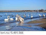 Купить «Зимовка перелетных птиц, Анапа», фото № 5491566, снято 15 января 2014 г. (c) Игорь Архипов / Фотобанк Лори