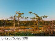Купить «Пейзаж летней тундры», фото № 5493998, снято 24 июня 2013 г. (c) Рашид Валитов / Фотобанк Лори