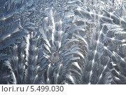 Купить «Морозные узоры», фото № 5499030, снято 18 января 2014 г. (c) Наталья Волкова / Фотобанк Лори