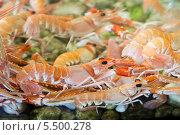 Купить «Креветки в большом аквариуме», фото № 5500278, снято 4 мая 2013 г. (c) Андрей Андронов / Фотобанк Лори