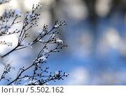 Снежинки на прошлогодней траве. Стоковое фото, фотограф Вячеслав Сапрыкин / Фотобанк Лори