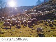 Купить «Стадо овец, пасущихся на горном пастбище в скалистых горах Грузии. Кавказ», фото № 5506990, снято 26 октября 2013 г. (c) M.G / Фотобанк Лори