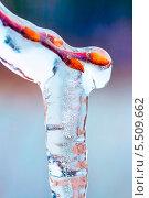 Купить «Ветка с почками вмёрзшая в сосульку.Весна», эксклюзивное фото № 5509662, снято 28 октября 2012 г. (c) Евгений Мухортов / Фотобанк Лори