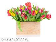 Тюльпаны в деревянном ящике. Стоковое фото, фотограф Виталий Радунцев / Фотобанк Лори