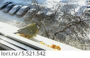 Купить «Синица под окном», видеоролик № 5521542, снято 26 января 2014 г. (c) Алексей Кокорин / Фотобанк Лори