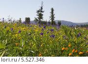 Альпийские луга в горах Западного Саяна. Стоковое фото, фотограф Сергей Кривогузов / Фотобанк Лори