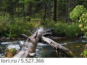 Таежная речка в горах Западного Саяна. Стоковое фото, фотограф Сергей Кривогузов / Фотобанк Лори