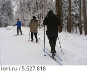 Лыжники в зимнем лесу в красивую снежную погоду (2012 год). Редакционное фото, фотограф lana1501 / Фотобанк Лори