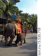 Купить «Катание туристов на слонах. Тропический парк Нонг Нуч (Nong Nooch Tropical Garden), Королевство Таиланд», фото № 5530718, снято 27 декабря 2013 г. (c) Григорий Писоцкий / Фотобанк Лори