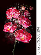 Купить «Волшебные орхидеи», фото № 5533294, снято 23 марта 2013 г. (c) ElenArt / Фотобанк Лори