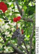 Бабочки. Стоковое фото, фотограф Елена / Фотобанк Лори