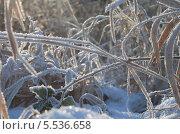 Мороз в траве. Стоковое фото, фотограф Елена Сидорова / Фотобанк Лори