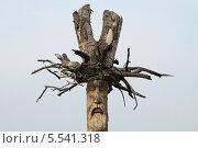 Купить «Идол», эксклюзивное фото № 5541318, снято 28 июня 2013 г. (c) Анатолий Матвейчук / Фотобанк Лори