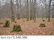 Купить «Заброшенный парк», эксклюзивное фото № 5546386, снято 18 ноября 2012 г. (c) Svet / Фотобанк Лори