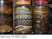 Купить «Змеи консервированные в  банках», фото № 5552222, снято 16 января 2014 г. (c) макаров виктор / Фотобанк Лори