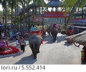Купить «Прогулка на слонах по тропическому саду Нонг Нуч (Nong Nooch Tropical Garden), Королевство Таиланд», фото № 5552414, снято 27 декабря 2013 г. (c) Григорий Писоцкий / Фотобанк Лори