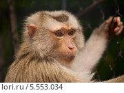 Купить «Грустная обезьяна в зоопарке», фото № 5553034, снято 23 февраля 2013 г. (c) Юлия Бабкина / Фотобанк Лори