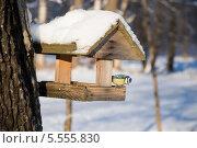 Купить «Синичка в кормушке», эксклюзивное фото № 5555830, снято 22 января 2014 г. (c) Александр Щепин / Фотобанк Лори