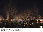 Голые деревья на ночной набережной. Стоковое фото, фотограф Сергей Хаменок / Фотобанк Лори