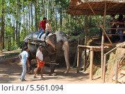 Купить «Туристы катаются на слонах в джунглях, Муннар, Индия», фото № 5561094, снято 2 декабря 2012 г. (c) Михаил Коханчиков / Фотобанк Лори