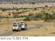 Купить «Джипы с туристами в Кении», фото № 5561174, снято 21 августа 2010 г. (c) Знаменский Олег / Фотобанк Лори