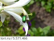 Цветок с жуком. Стоковое фото, фотограф Максим Люлюченко / Фотобанк Лори