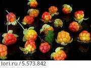 Лесная ягода морошка. Стоковое фото, фотограф Наталья / Фотобанк Лори