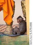 Купить «Обезьяна в буддистском храме Wat Leu, Сиануквиль», фото № 5579890, снято 26 февраля 2013 г. (c) Юлия Бабкина / Фотобанк Лори