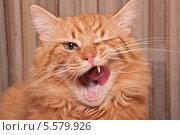 Купить «Рыжий кот облизывается», фото № 5579926, снято 21 января 2018 г. (c) Елена Ермакова / Фотобанк Лори